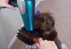 Little Girl's Hairstyles: How to Round Brush and Blow Dry Hair Video